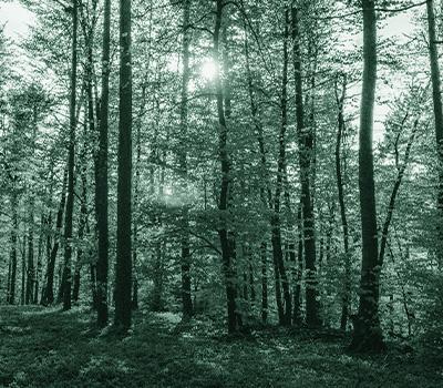 Photo d'une forêt verte